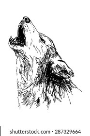 hand drawing of a howling wolf
