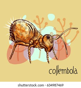 Hand drawing illustration with springtail (collembola) insect and floral background