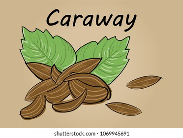 hand drawing illustration vector of caraway seed with leaf - each part is isolated and can arrange in the way you want
