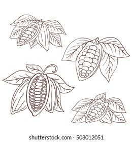 Hand drawing isolated cocoa beans. Vector illustration