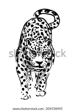 Hand Drawing Jaguar Vector Illustration Vector de stock (libre de ...