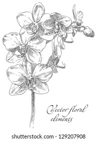 Hand drawing orchid flower