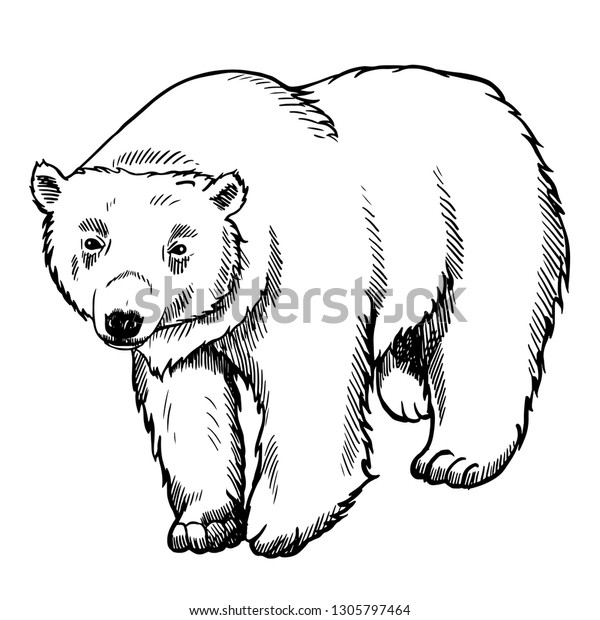 Hand Drawing Polar Bear Vector Illustration Stock Vector