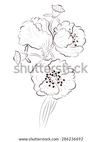 Illustration poppy simple flower drawing pictures picturesboss hand drawing poppy flower simple line stock vector royalty free jpg 338x470 illustration poppy simple flower mightylinksfo