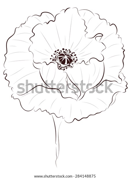Hand Drawing Poppy Flower Simple Line Stock Vector Royalty Free 284148875