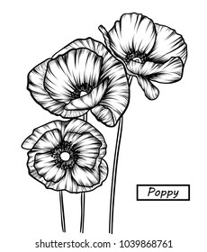Hand drawing Poppy, Tulip and Carnation flowers. Vector, illustration and clip art on white backgrounds.Idea for business visit card, typography vector,print for t-shirt.