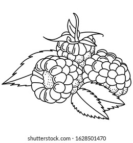 Hand drawing raspberries; doodle berries for stickers, posters, web design. Black and white vector illustration.