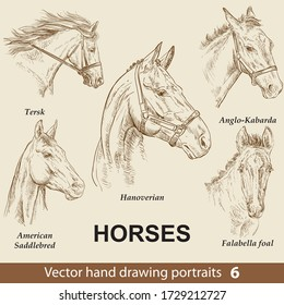 Hand drawing set of horses breeds. Elegance horse head isolated on beige background. Pencil, ink hand drawn realistic portrait. Animal collection. Good for print T-shirt, banner. Stock illustration