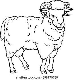 Hand drawing Sheep. farm animals set. Sketch graphic style. Design for education text book, coloring book.