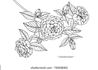 Hand drawing and sketch Camellia flower. Black and white with line art illustration.