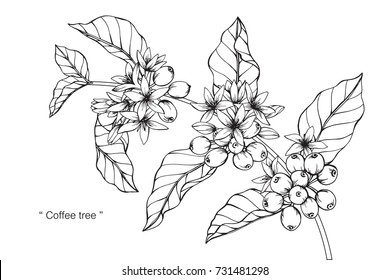 Hand drawing and sketch Coffee tree. Black and white with line art illustration.