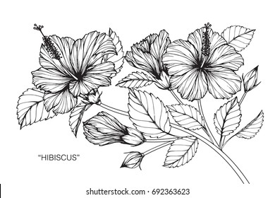 Hand drawing and sketch with Hibiscus flower. Black and white line art illustration.