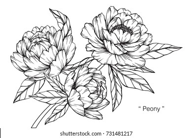 Black and white images stock photos vectors shutterstock hand drawing and sketch peony flower black and white with line art illustration mightylinksfo