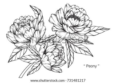 Hand Drawing Sketch Peony Flower Black Stockvector Rechtenvrij