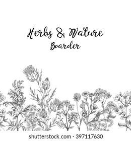 Hand drawing sketches of medicinal herbs
