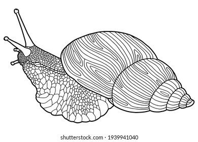 Hand drawing snail. Coloring page. The original print. Illustration for a children's book. Coloring book for children and adults.