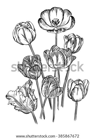 Hand Drawing Spring Flowers Tulips Rendering Stock Vector Royalty