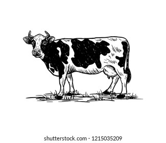 Hand Drawing Vector Livestock Cow or Cattle Farm Animal Sign Symbol Icon Logo Template Design Inspiration