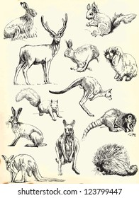 Hand drawings (black outlines) - Animals - Vector description: Collection of drawings (each on a separate layer) on vintage paper in yellow color (the paper is separated in the lower layer).