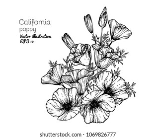 Hand drawings California poppy flowers. Black and white with line art vector illustration.