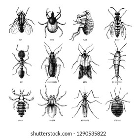 Hand drawn 12 dangerous insects. Pest control. Vector illustration