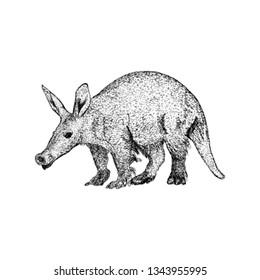 Hand drawn aardvark illustration vector