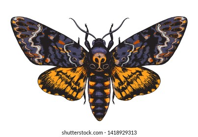 Hand drawn Acherontia Styx butterfly isolated on white background. Death's-Head Hawkmoth top view. Illustrations in vintage style, t-shirt design, tattoo art.
