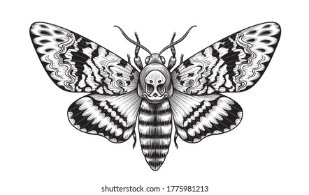Hand drawn Acherontia Styx butterfly isolated on blank background. Vector monochrome Death's-Head Hawk Moth top view. Black and white Illustration in vintage style, t-shirt design, tattoo art.