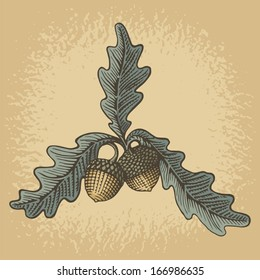 Hand drawn acorns and oak leaves with woodcut shading on grunge beige background.
