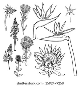Hand drawn African flowers on white background. Vector sketch illustration.