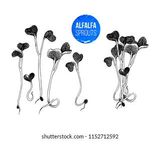 Hand drawn alfalfa sprouts - kai wah-rei - vector illustration