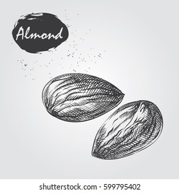 Hand drawn almond isolated on white background. Nuts sketch in style, vector illustrator.