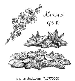 Hand drawn almonds and branch of flowering almond