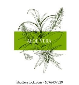 Hand drawn aloe vera branch and flower. Engraved vector banner. healing. Food ingredient, aromatherapy, cooking. For cosmetic package design, medicinal herb, treating, healt care.