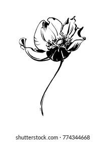 Hand drawn anemone flower calligraphy style