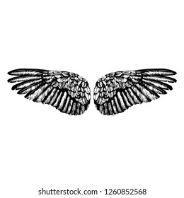 Hand drawn angel wings illustration of a pair of angel or eagle wings spread tattoo.