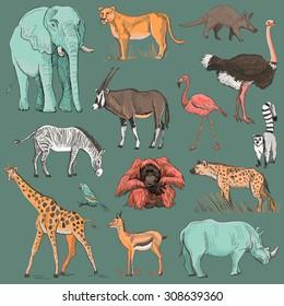 Dibujo del planeta animal extraído a mano, como elefante, jirafa, leona, hiena, orangután, loro, rinoceronte, cebra, ciervo, lemur, avestruz, antepasados, flamingo