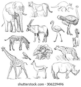 Hand drawn animal planet set, excellent vector illustration, EPS 10