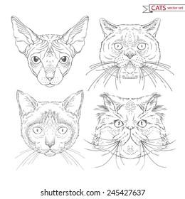 hand drawn animal set of cats