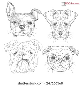hand drawn animal set of dogs