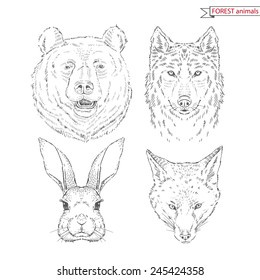 hand drawn animal set of forest animals