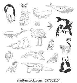 Hand drawn animals vector doodle graphic illustrations set