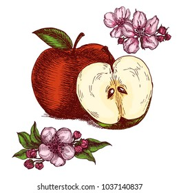 Hand drawn apples and apple tree flowers