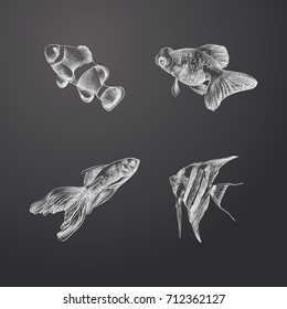 Hand Drawn Aquarium Fish Sketches Set. Collection Of Insect Sketch Elements isolated on chalkboard