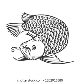 Hand drawn arowana fish. Vector Illustration.