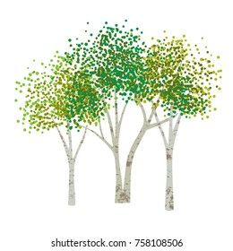 hand drawn aspen birch vector trees clipart