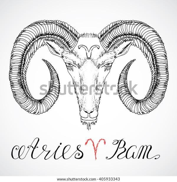 7bdefa3cc Hand drawn astrological zodiac sign Ram or Aries. Line art vector  illustration of engraved horoscope