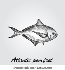 Hand Drawn Atlantic pomfret Sketch Symbol isolated on white background. Vector of Fishing elements In Trendy Style. Sketch of saltwater sea or freshwater river fish species flounder