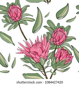 hand drawn australia wild flower, king protea seamless pattern on white background