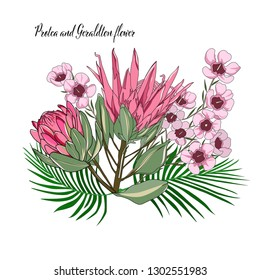 hand drawn australia wild flower protea and geraldton wax flower isolated on white background